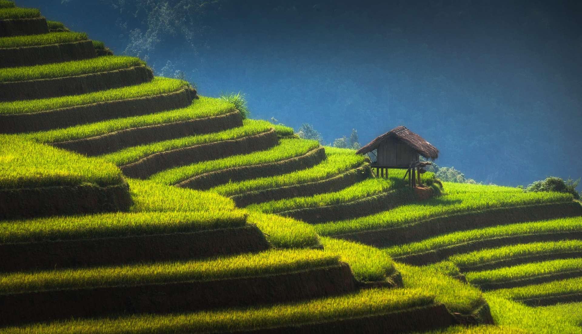 Home on terraced rice field in Vietnam