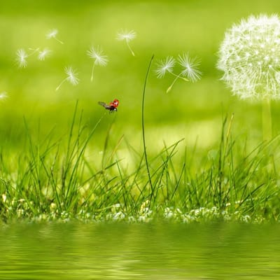 Green grass next to water